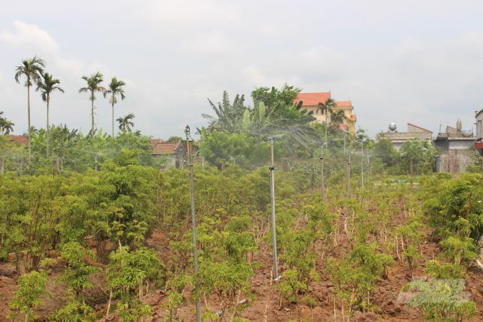 Tỉnh Nam Định: Tưới tiên tiến, tiết kiệm nước cho cây trồng cạn