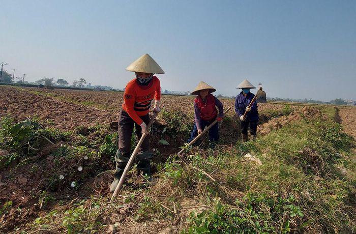 Hà Nội - Cần thiết hỗ trợ phát triển thủy lợi nội đồng